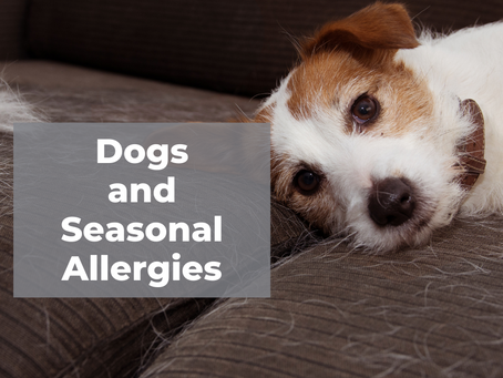 Dogs and Seasonal Allergies