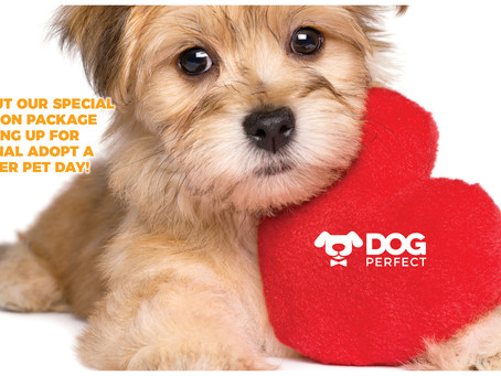 Supporting Manatee County Shelters on National Adopt a Shelter Pet Day