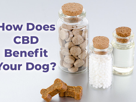 How Does CBD Benefit Your Dog?