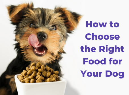 How to Choose the Right Food for Your Dog