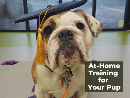 At-Home Training for Your Pup