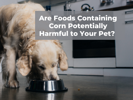 Are Foods Containing Corn Potentially Harmful to Your Pet? The Short Answer is Yes.