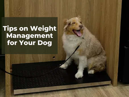 Tips on Weight Management for Your Dog