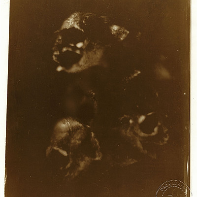 A tribute to Goya or Goya and wet collodion