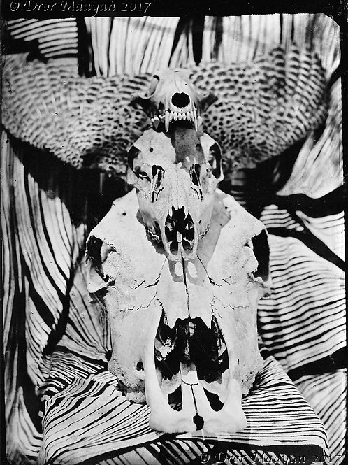 Tintype, 16.5 x 12 cm