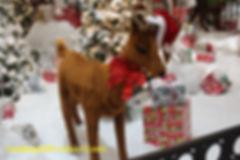 12-cowboy-december-week04.jpg