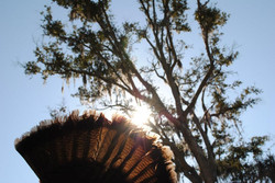 turkey sun