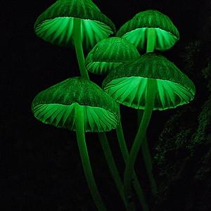 Light mushrooms