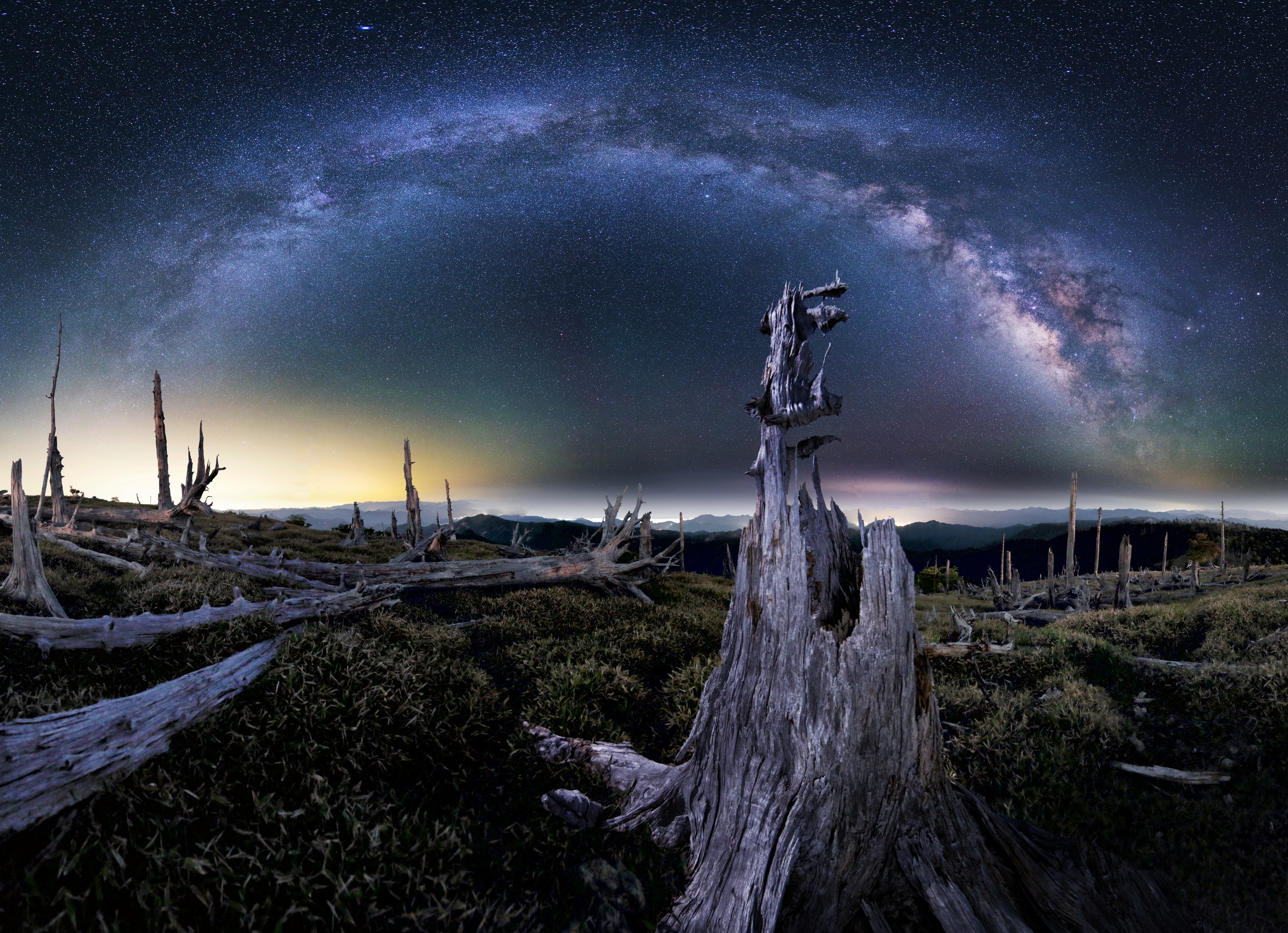 原生林の死