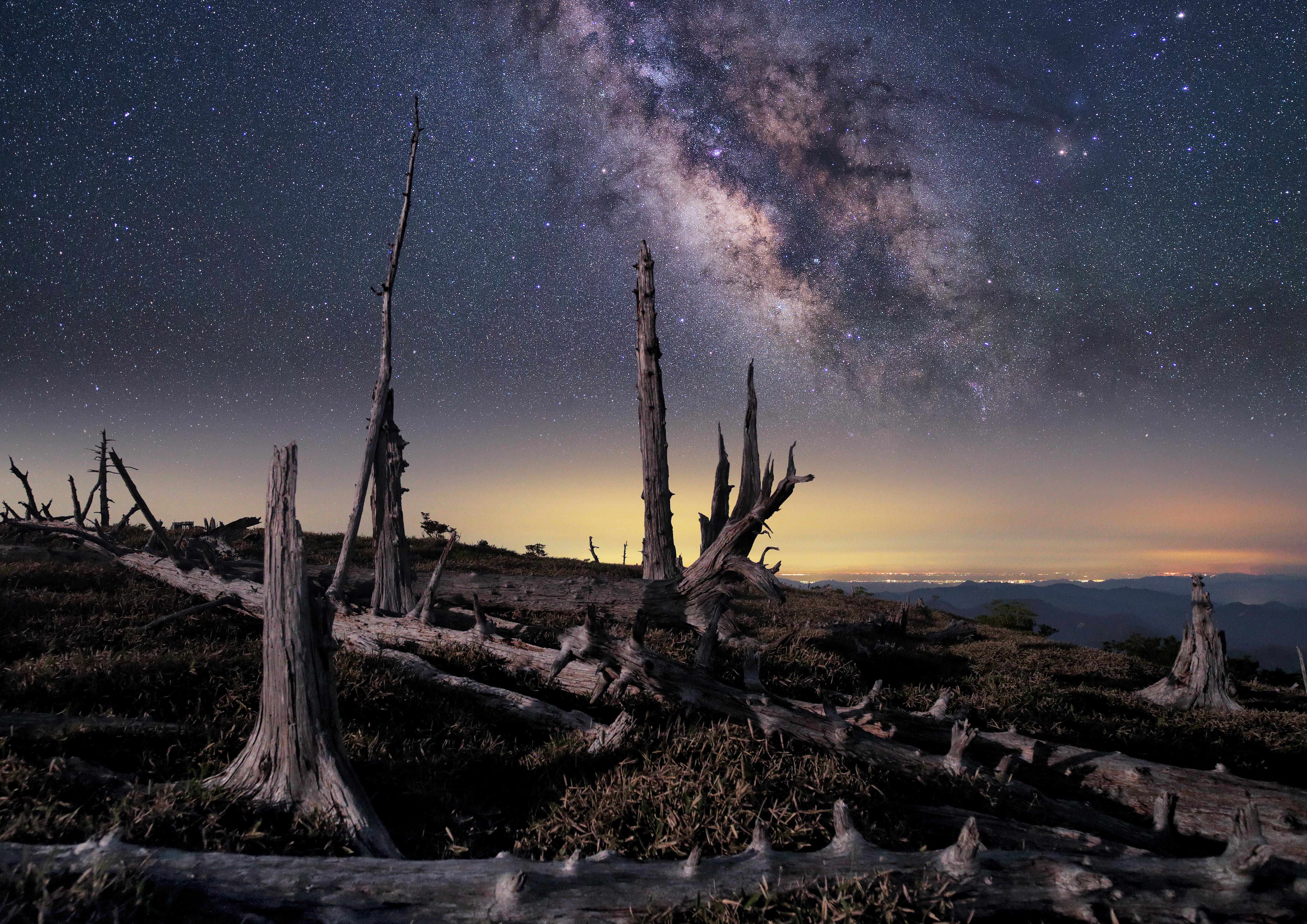 原生林の夜