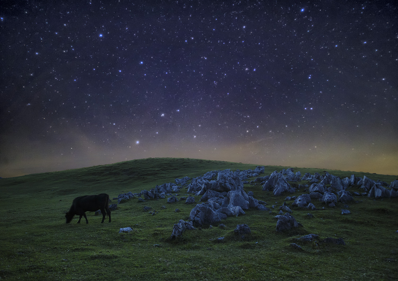 月夜の高原