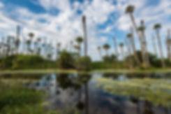 orlando-wetlands.jpg