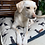 Thumbnail: Labrador Love