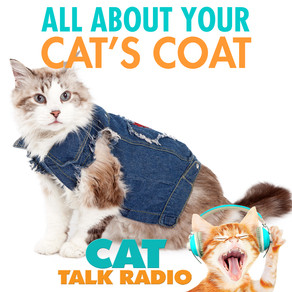 All About Your Cat's Coat