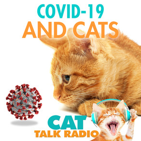 Covid-19 and Cats