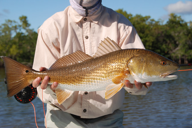 bronze-redfish.jpg.JPG