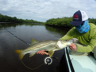 lane-bay-snook.jpg.JPG