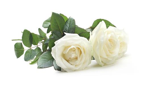 three white roses isolated on white_edit
