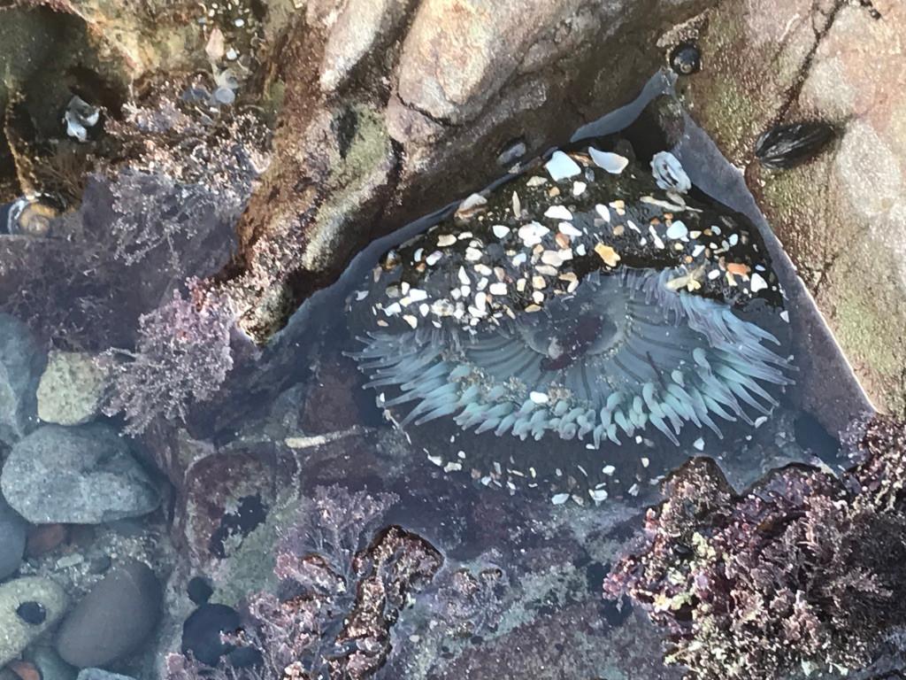 California Coast Tidepool