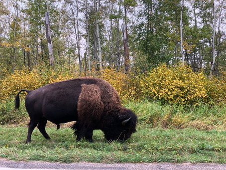 Camping at Elk Island National Park (Alberta)