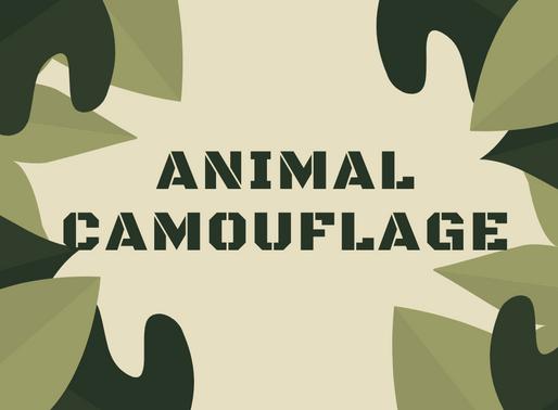 Animal Camouflage Activity