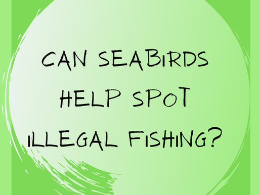 Seabirds could help spot illegal fishing