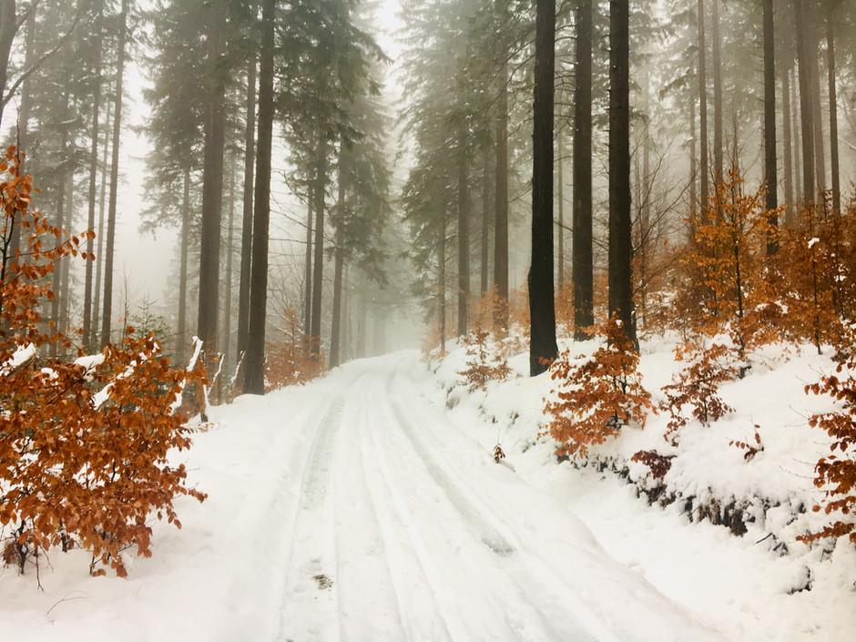 European Holiday Update #3: A Birthday Stroll in a Polish Forest or Spacer Urodzinowy w Polskim Lesi