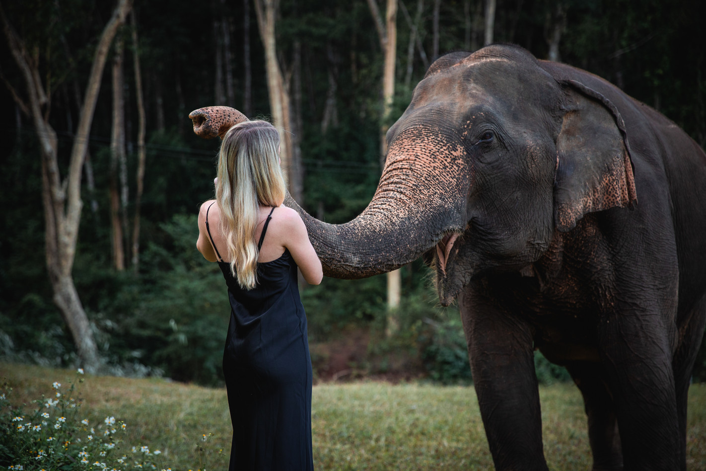 Girl plays with elephant