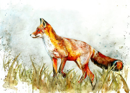 Fox - Watercolour and Pen