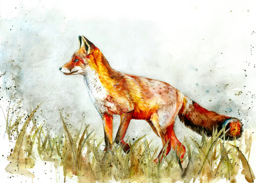 Fox - Watercolour and Pen