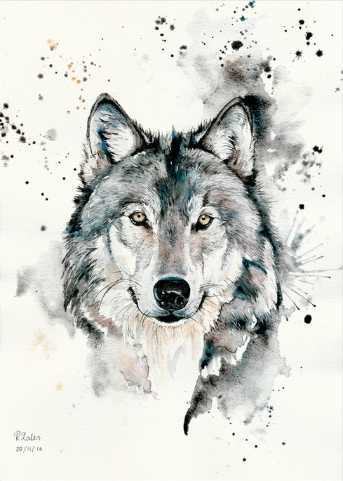 Wolf - Watercolour and Pen