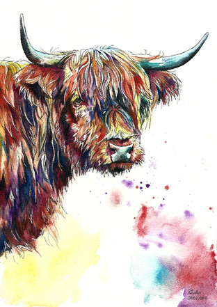 Guy the Highland Cow - Watercolour and Pen