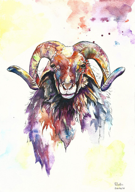 Stan the Ram - Watercolour and Pen