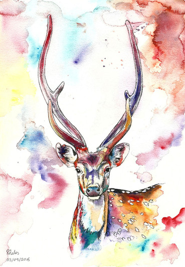 Peter the Stag - Watercolour and Pen