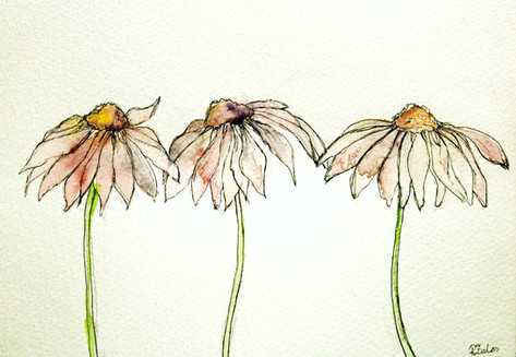 Wilted Daisies