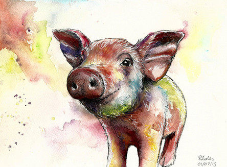 Trottie the Pig - Watercolour and Pen