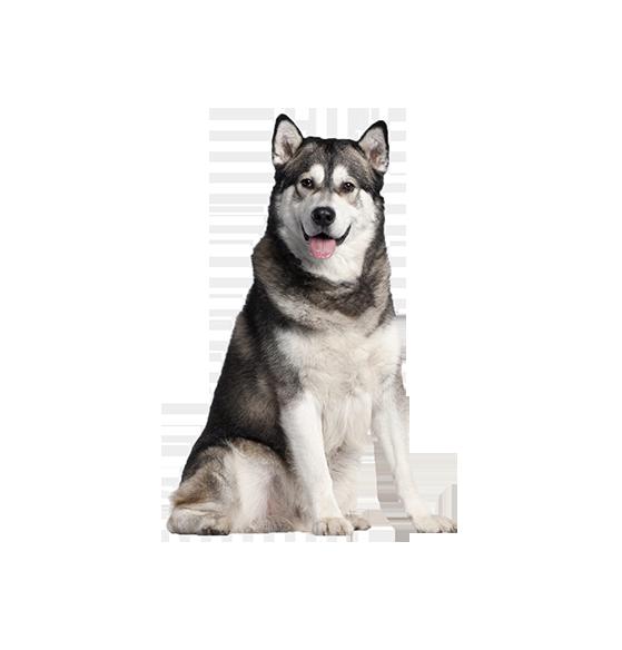 dog00.png