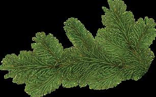 41-413835_pine-tree-branch-pine-tree-bra