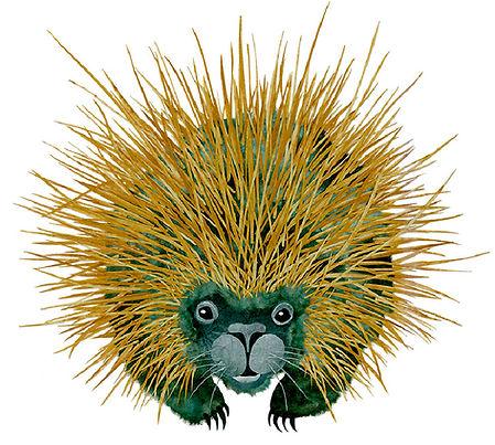 porcupine_for site.JPG