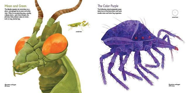 tiny monsters mantis opt.JPG