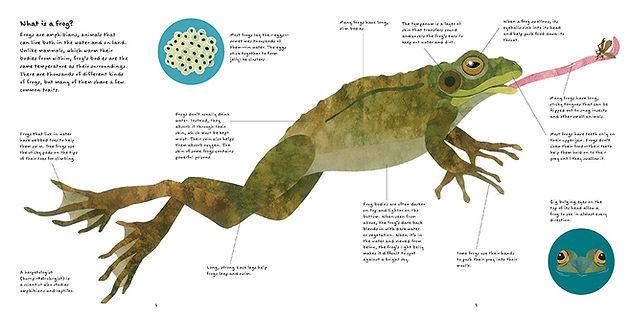 Frog book frog spread opt.JPG