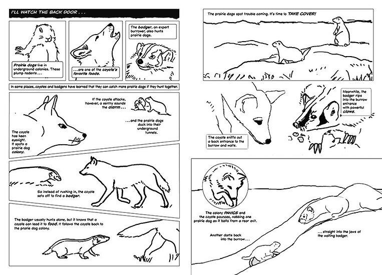 hippo coyote dummy opt.JPG
