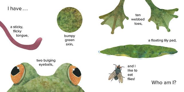 Who Am I frog 1 opt.JPG