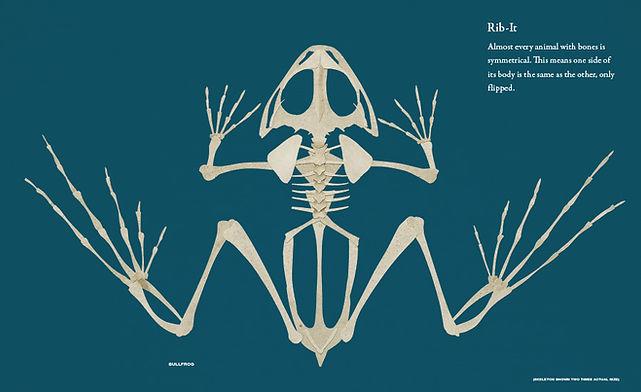 bone_mech_ frog opt.JPG