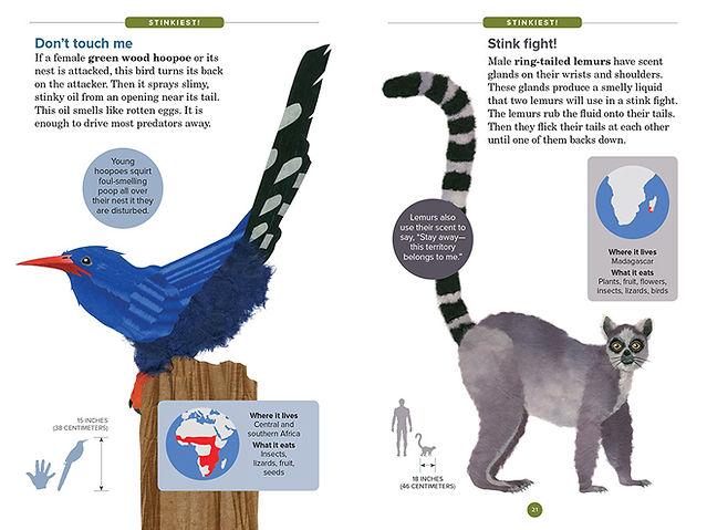 stinkiest layout_lemur opt.JPG