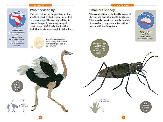 Speediest layout_ostrich opt.JPG