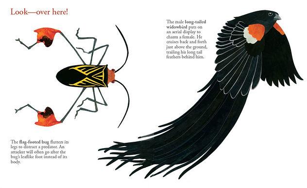 LOOK AT ME bug and bird opt.JPG