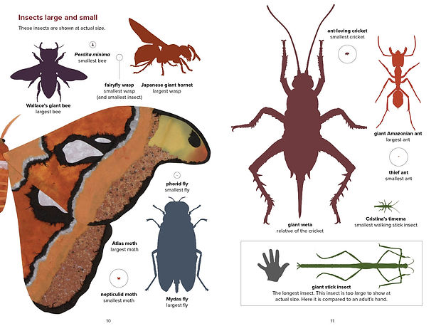 Jenkins_INSECTS- scale opt.jpg