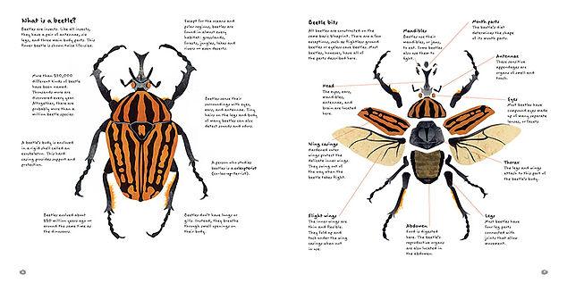 Beetles parts opt.JPG