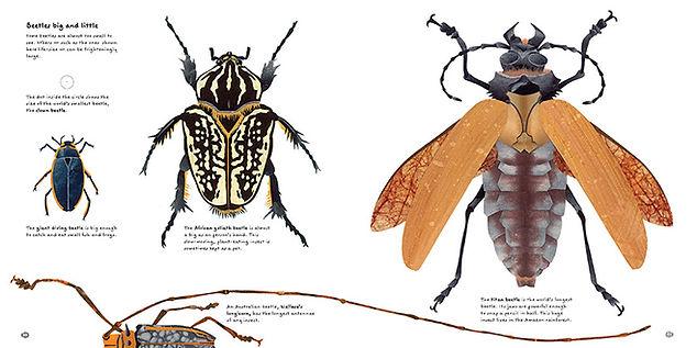 Beetles scale opt.JPG